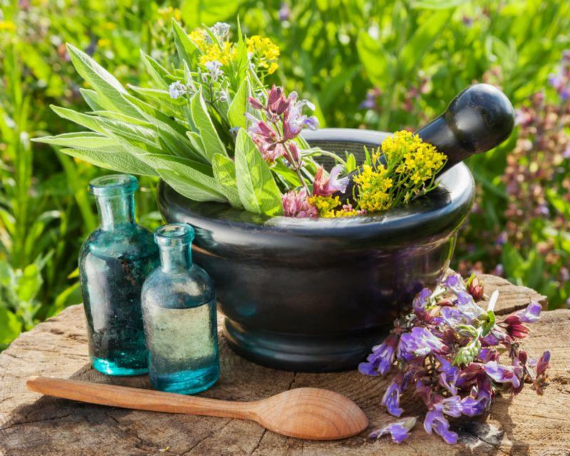 medicinal-plants.jpg