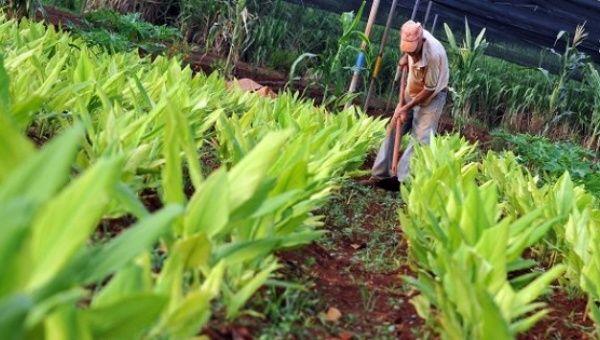 agriculturaurbanacuba.jpg